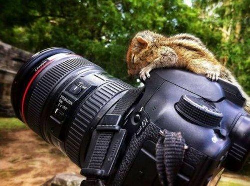 Подборка прикольных фотографий и ржачных картинок