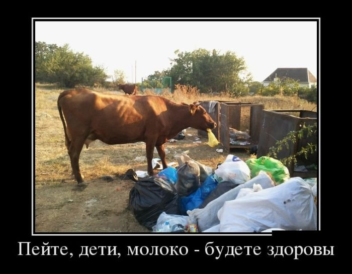 Подборка смешных демотиваторов и приколов