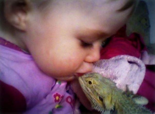 Прикольные домашние рептилии. Необычные питомцы