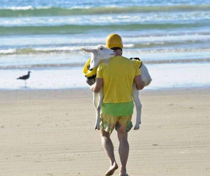 Пляжные приколы в подборке фото. Смешные картинки