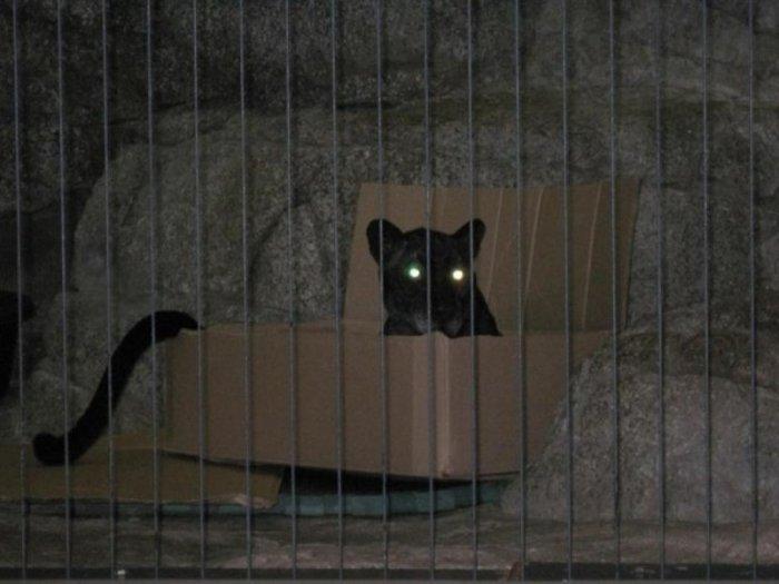 Все кошки одинаковые. Смешная подборка фото