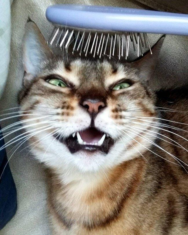 Кошки улыбаются. Смешные картинки