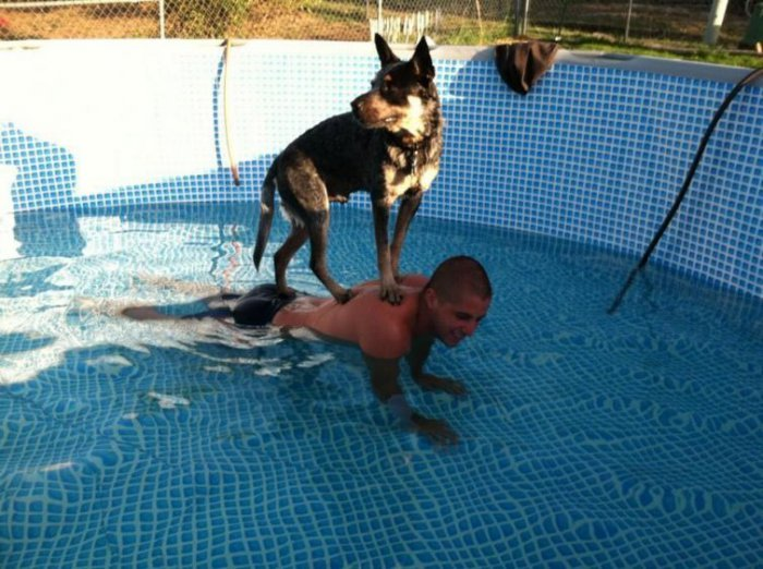 Собаки, которые боятся воды. Прикольные фото