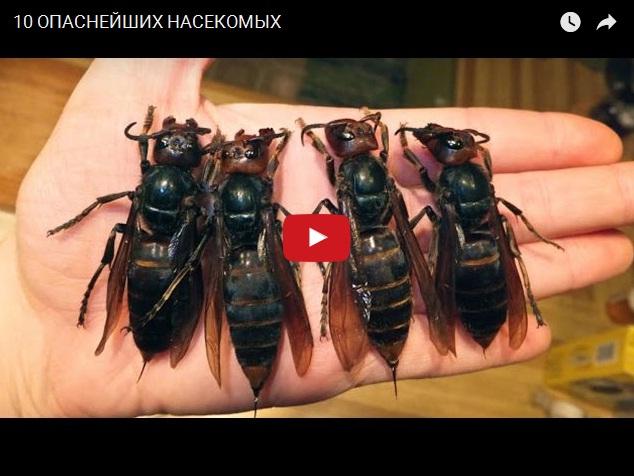 ТОП-10 самых опаснейших насекомых для человека