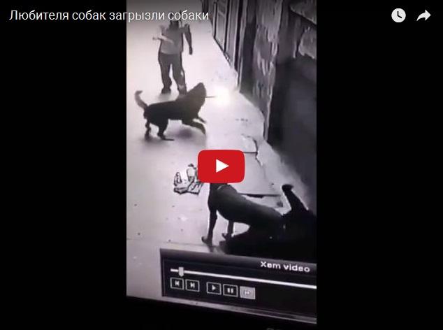 Собаки загрызли любителя собак