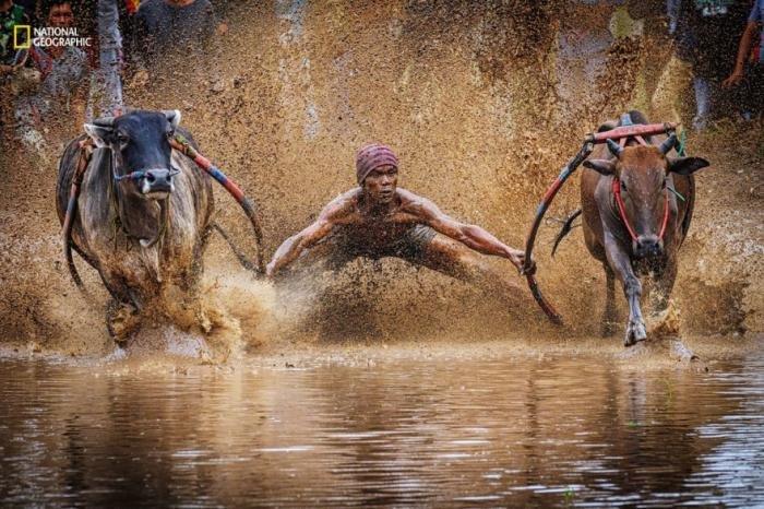 Лучшие фото с конкурса National Geographic 2016