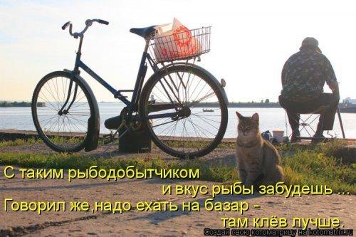 Весёлые котоматрицы про смешных котов