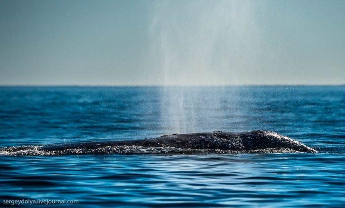 Китовая аллея на Чукотке