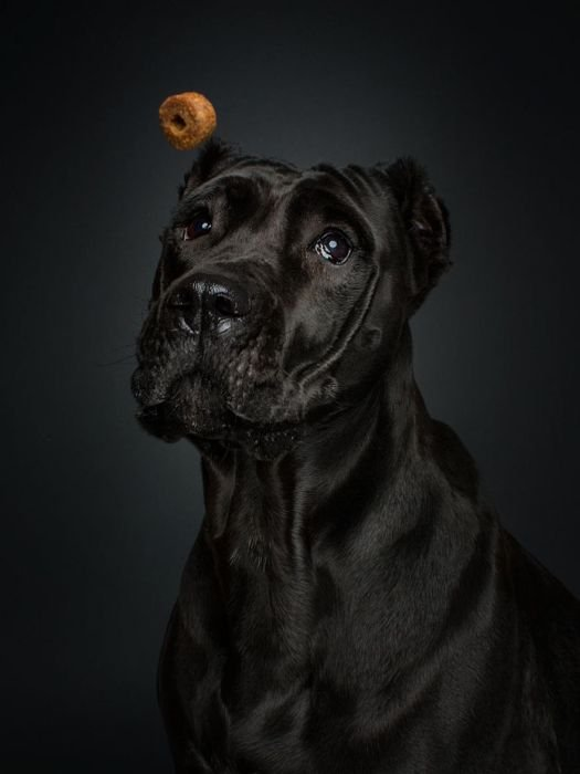 Собаки ловят еду. Прикольные фото