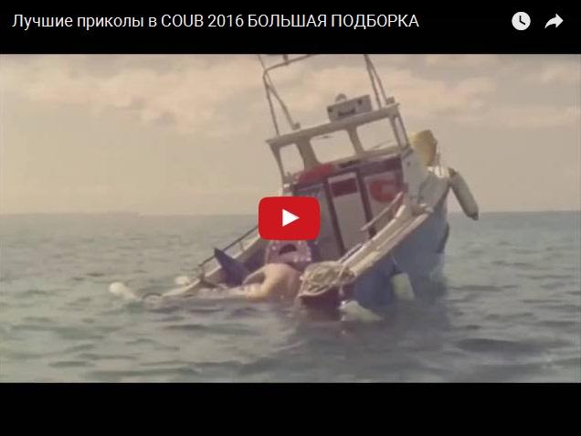 Большая подборка видео приколов из COUB 2016
