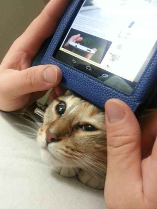 Фотографии назойливых котов. Смешные фотки