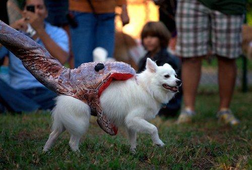 Прикольные фото собак на Хэллоуин. Картинка дня