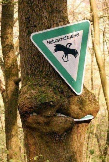 Природа берёт своё. Прикольные фотки