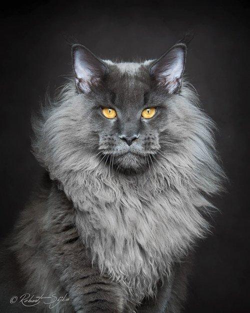 Прикольные коты в фотоподборке. Смешные картинки