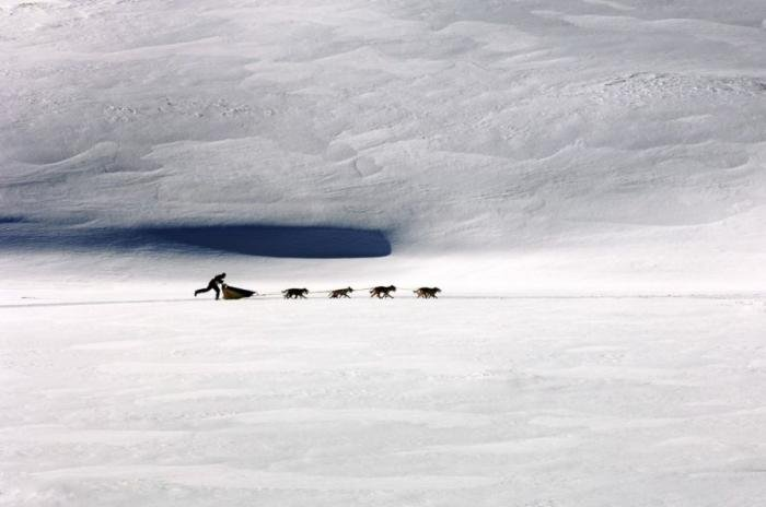 Сибирский хаски. Прикольные фото собаки