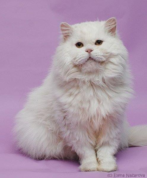 Преображение уличных котов. Интересные фото