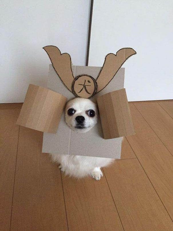 Прикольный пёс в разных образах. Смешные фотки