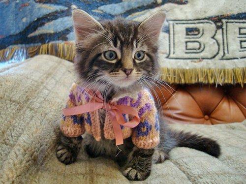 Прикольные животные в свитерах. Весёлая подборка