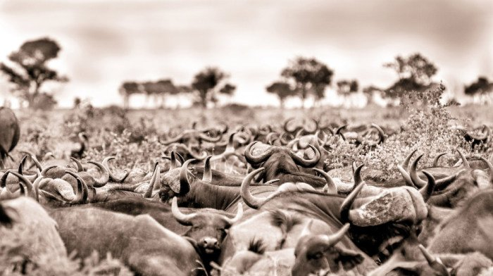 Лучший фотограф Африки и его работы. Красивые фото