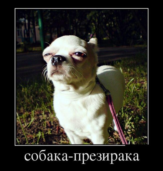 Русские демотиваторы в прикольной подборке. Весёлый пост
