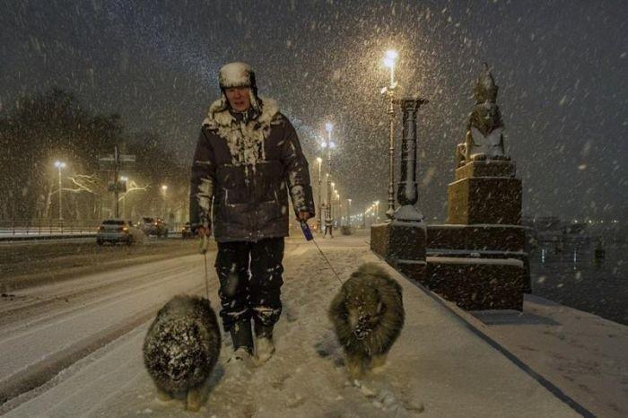 Прикольные фото Александра Петросяна