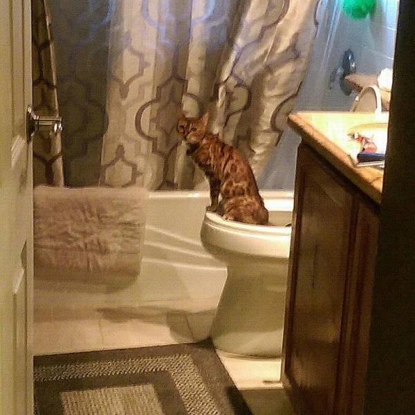Туалетный юмор. Слабонервным не смотреть