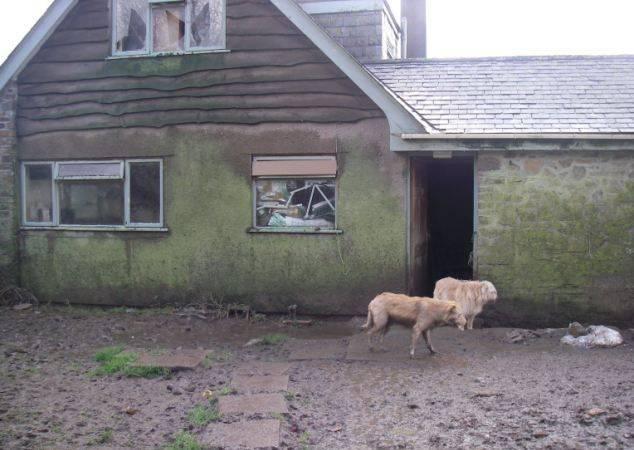 Тот момент, когда в одном доме с тобой живут 33 лошади и 34 собаки