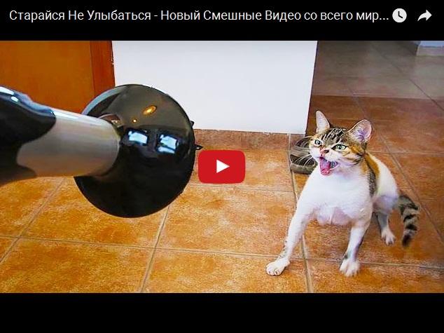 Подборка самого смешного видео про животных