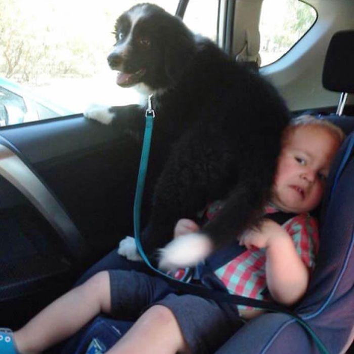 Наглые собаки, которым плевать на ваше личное пространство