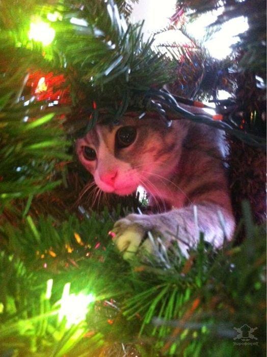 Приколы про Новый год - коты на елках