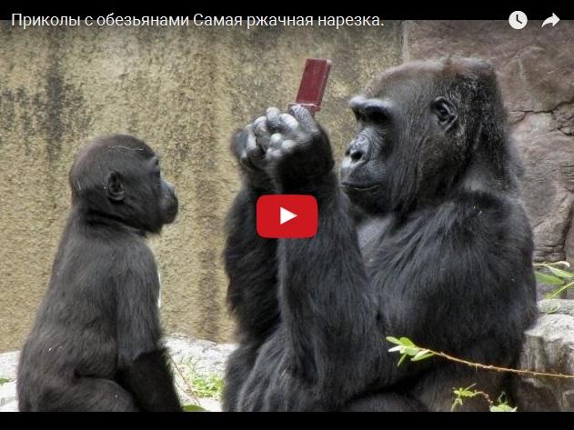 Видео приколы с обезьянами
