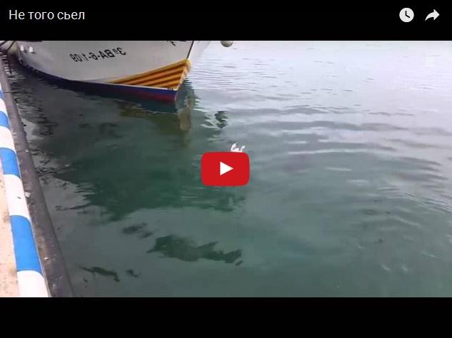 Не того съел. Видео про дельфина