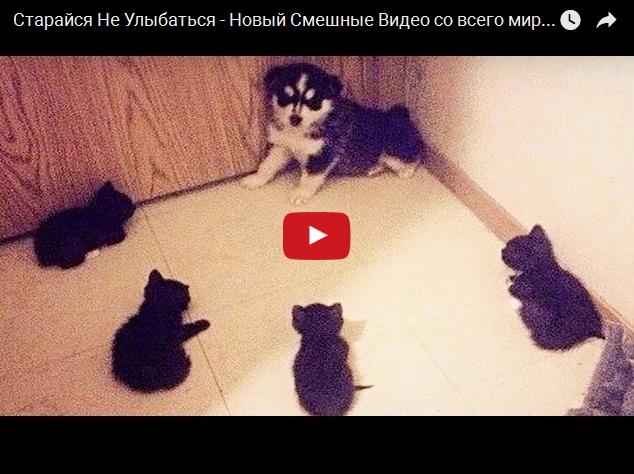 Прикольные видосы про кошек