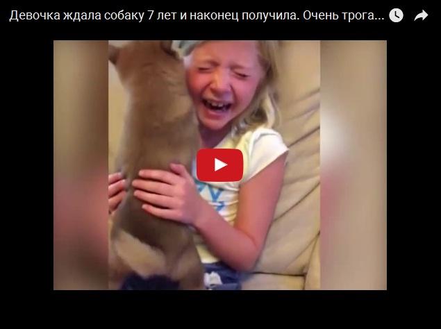 Тот момент, когда семь лет ждешь собаку и тебе её наконец дарят