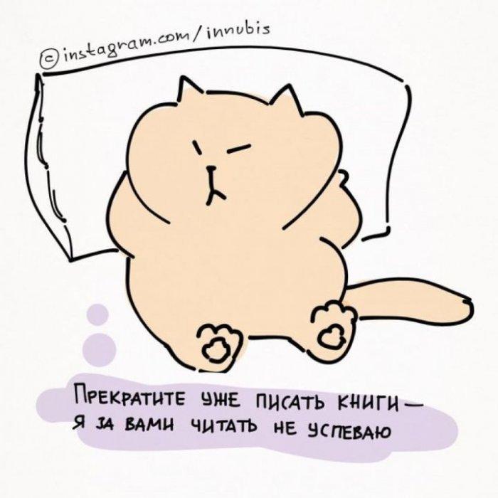 Нехитрые кошачьи правила жизни