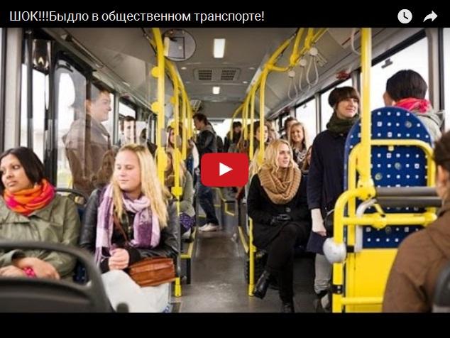 Когда в общественном транспорте едет быдло