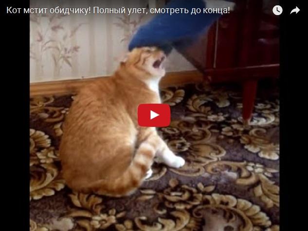 Рыжий кот жестоко мстит обидчику