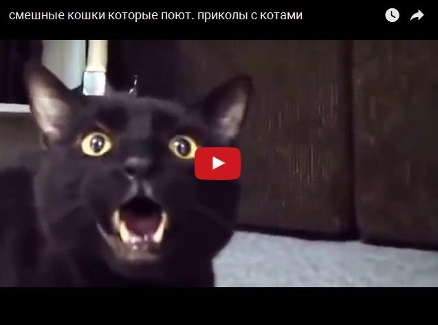 Смешные поющие коты