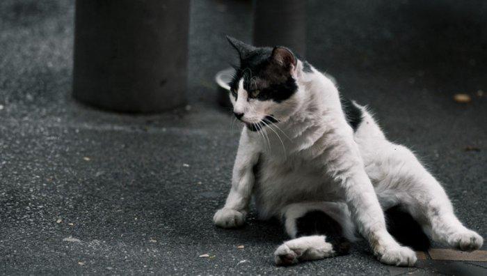 Жизненные фотографии уличных котов