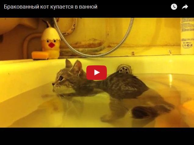 Это какой-то бракованный кот - купание в ванной