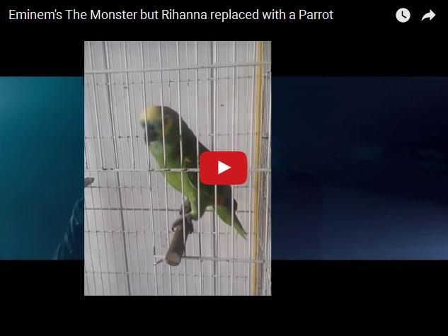 Прикольный дуэт Эминема с попугаем
