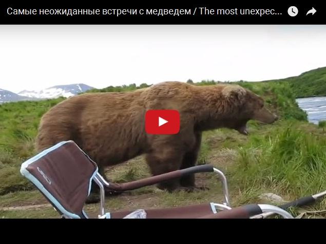 Тот момент, когда встреча с медведем бывает неожиданной