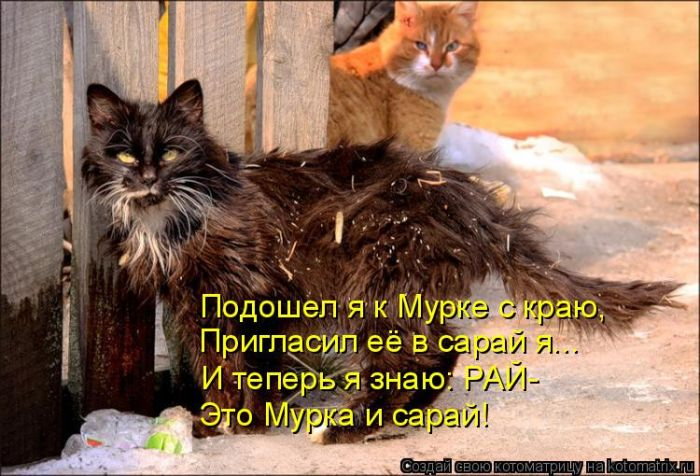 Прикольные картинки  с надписями про животных
