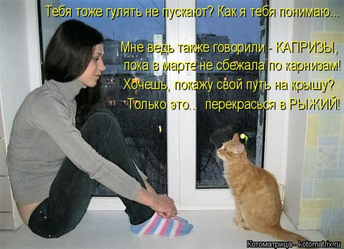 Мужчины как коты картинки с надписями