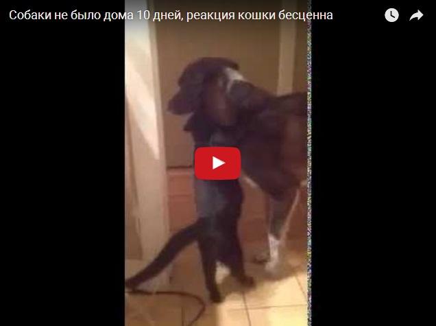 Кот соскучился по собаке, которой не было дома 10 дней