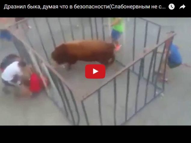 Как не надо дразнить быка