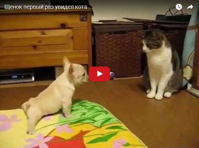 Маленький щенок в первый раз увидел кота