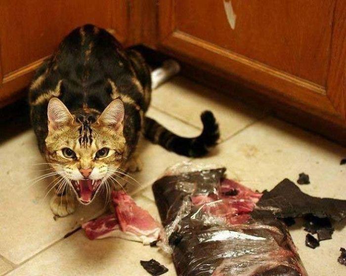Веселые фотографии странных котов