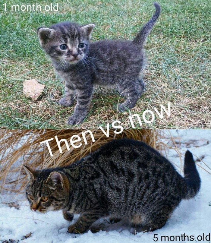 Животные - маленькие и взрослые