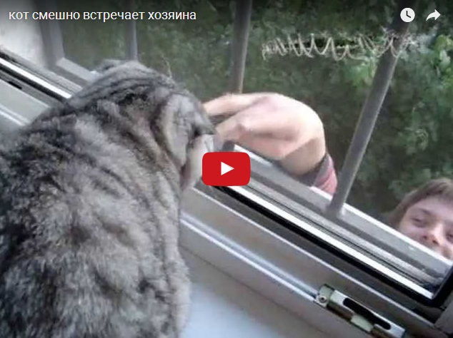 Кот смешно встречает любимого хозяина